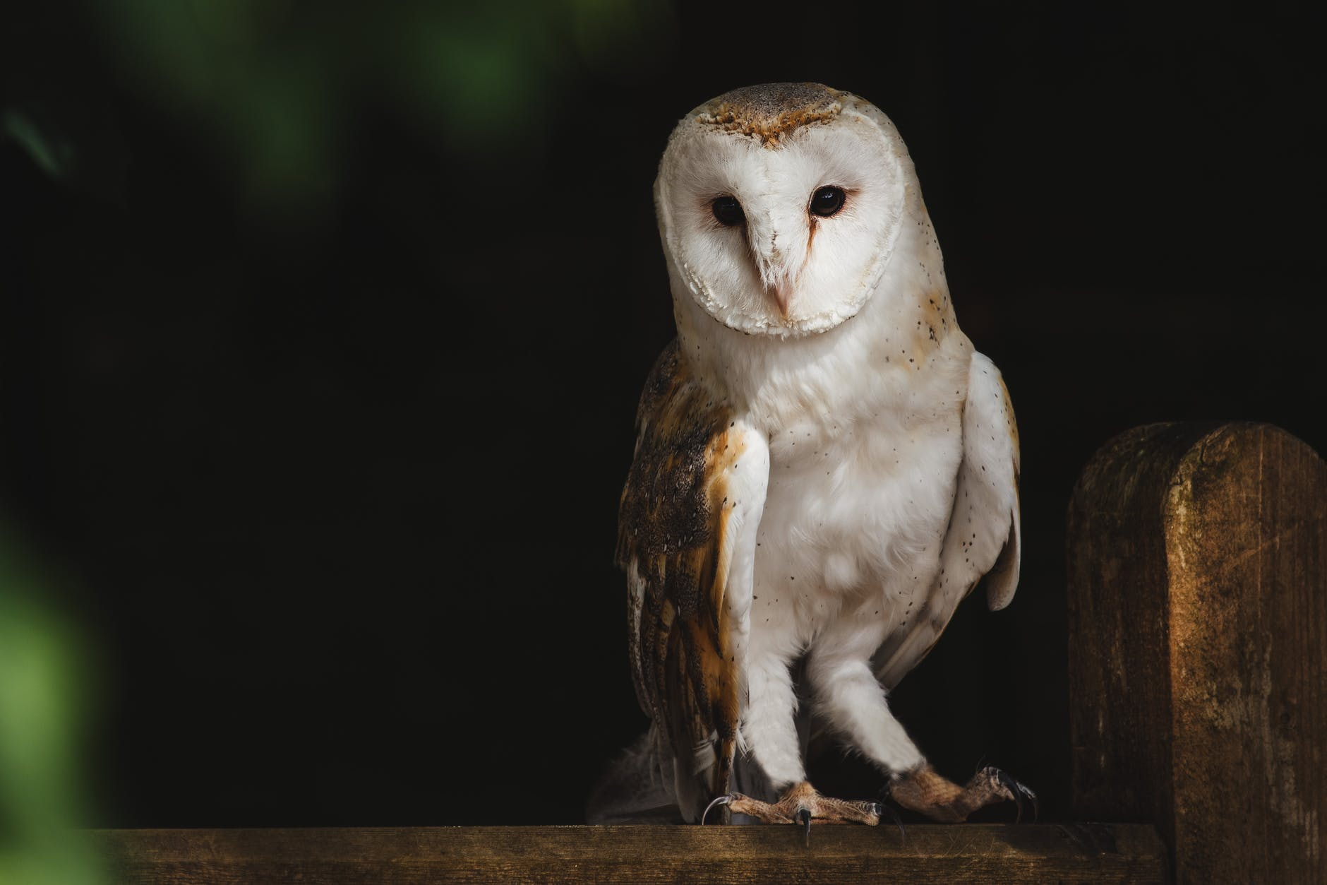 Are Your Kids Night Owls?
